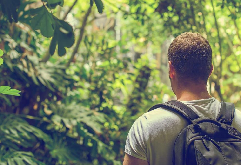 Na floresta: como você se vira?